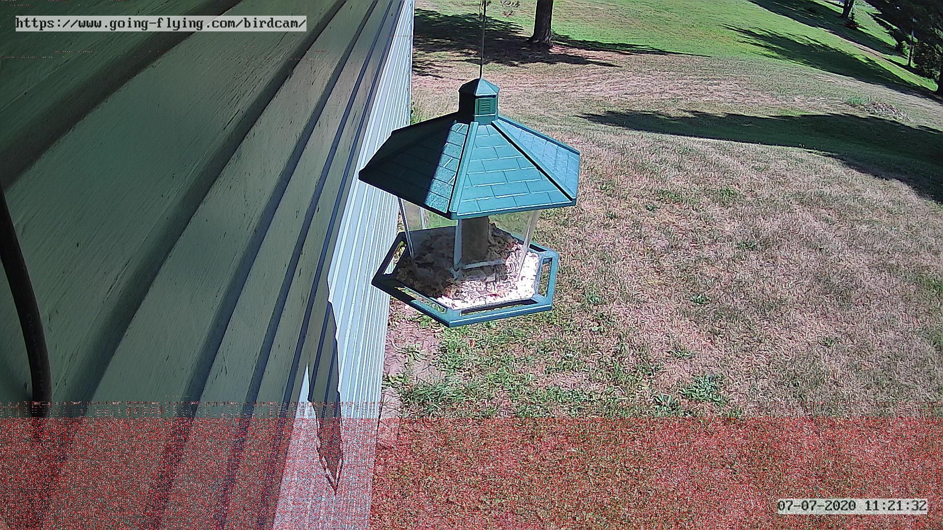 Birdcam frame grab