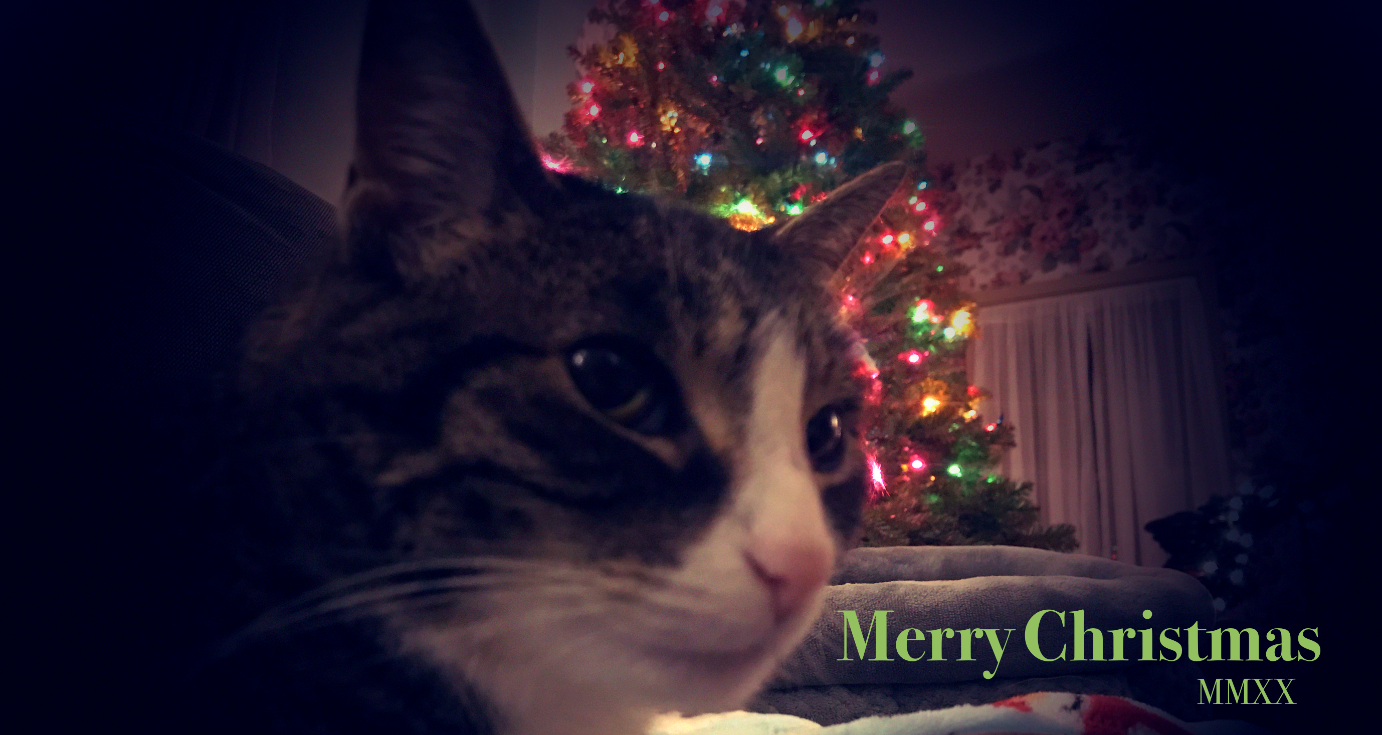 Merry Christmas from Molly and I